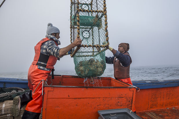 Unloading the lobster from the nets